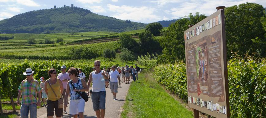 con đường rượu vang