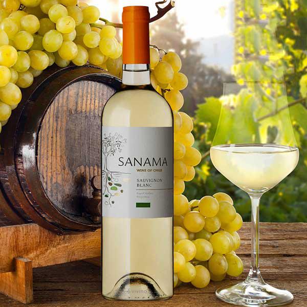 Rượu vang Sanama Sauvignon Blanc được trưởng thành từ những trái nho Sauvignon Blanc ngon nhất thung lũng Rapel