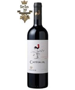 Chile Cantoalba Cabernet Sauvignon có mầu đỏ tươi đẹp mắt. Hương thơm phức hợp của trái cây chín đỏ, nho đen và hương cam thảo hòa quyện.
