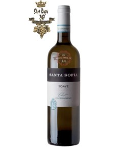 Rượu Vang Đỏ Santa Sofia Soave Montefoscarino có mầu vàng rơm nhạt. Hương thơm của các loại trái cây như đào trắng, vỏ cam, sả, cây hồi