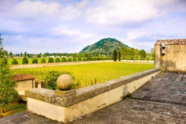 Tuscany là quê hương của những vườn nho đẹp nhất nước Ý, những ngọn đồi xanh tươi và có thể