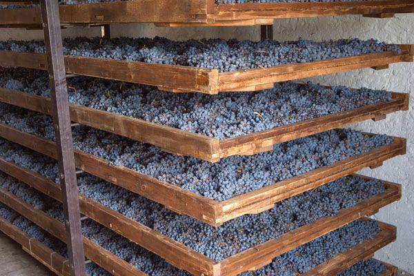 Appassimento bao gồm việc để nho khô, để quả nho mất đi một lượng nước đáng kể trong khi tất cả các chất khác