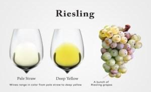 Riesling là một giống nho rượu vang trắng thơm, tạo ra một loại rượu vang trắng với hương hoa và hương vị trái cây