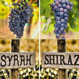 Syrah, còn được gọi là Shiraz , là một loại rượu vang đỏ phổ biến. Mặc dù quê hương của giống nho đỏ này là Pháp