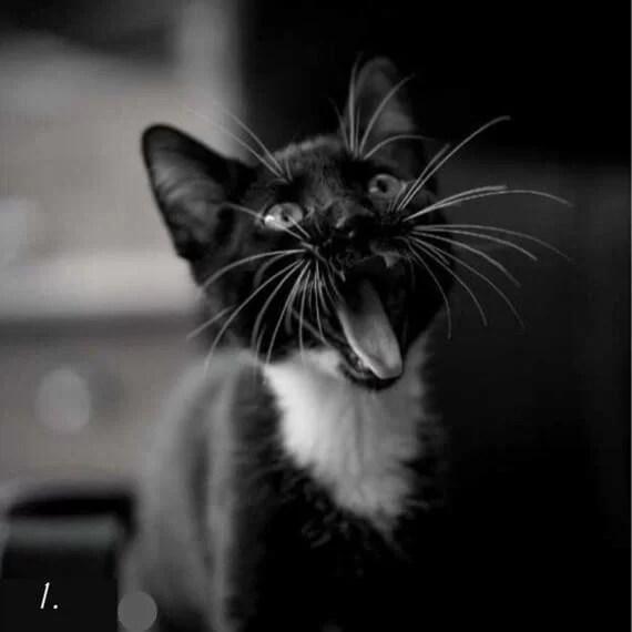 тёмная сторона личности - тест - чёрная кошка
