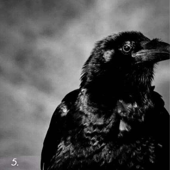 тёмная сторона личности - тест - ворон