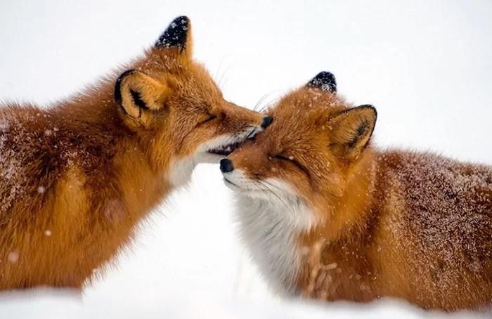животные, у которых можно поучиться верности 10