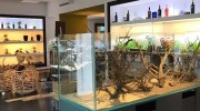 WildAndNature.it Lo show-room degli acquari ad acqua dolce a Prato