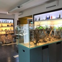 WildAndNature.it Lo show-room degli acquari ad acqua dolce a Prato