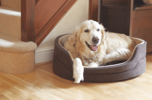 Orthopedic Beds Help Pets Live Longer!