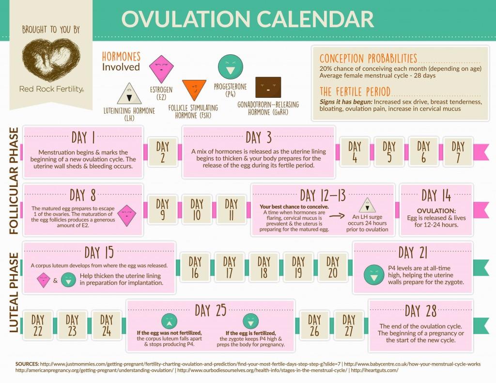 When Do Women Ovulate