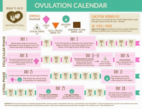 graphic ovulation calendar to help you easily understand ovulation