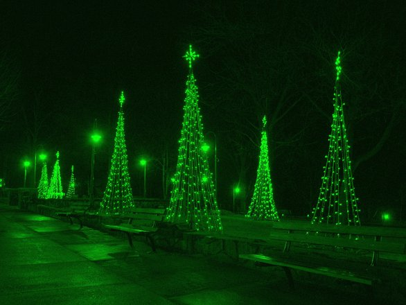 Christmas Trees light up
