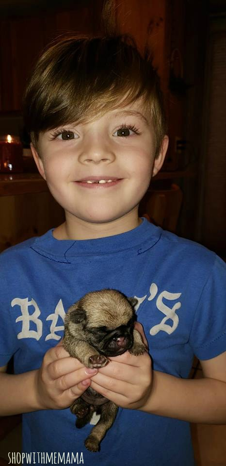 a boy and his baby pug puppy