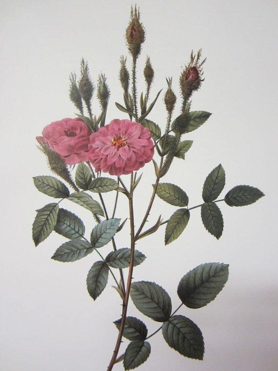 Le rose di Federico Garcìa Lorca – Episodio 4  Rosa Pomponiana