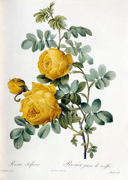 Le rose di Federico Garcìa Lorca – Episodio 5  Rosa Sulfurea
