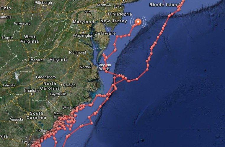 Great White Sharks Online Track Captivating Many Shorebread