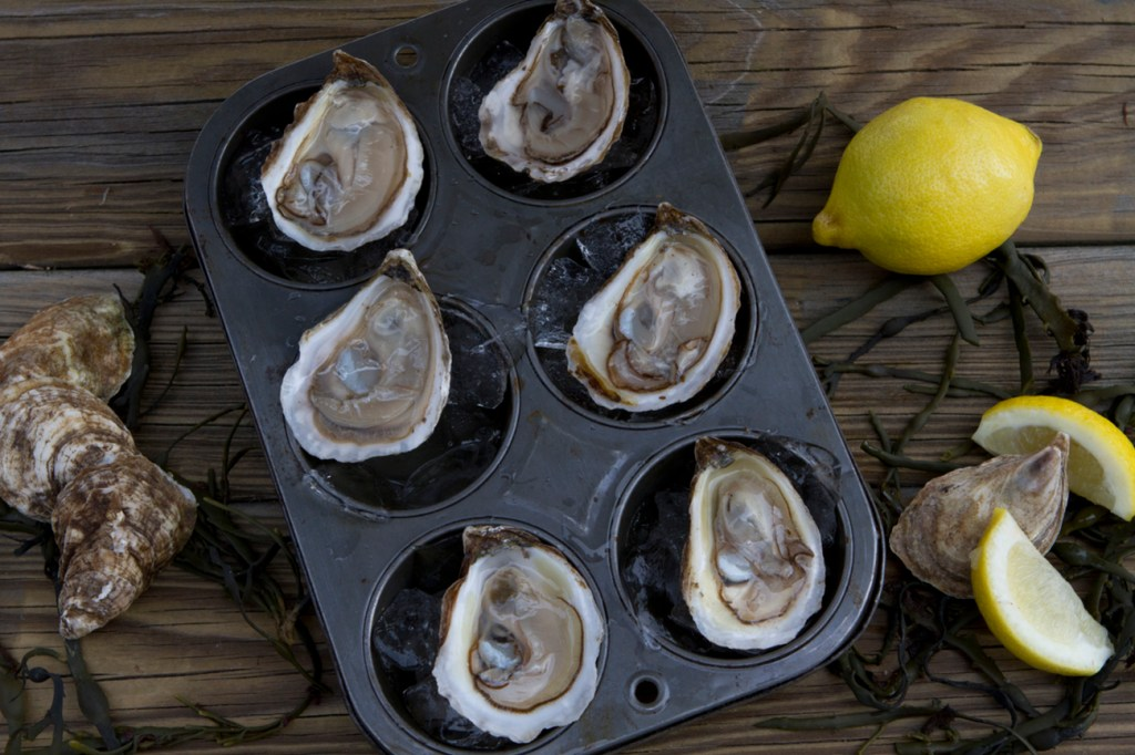 livs oysters