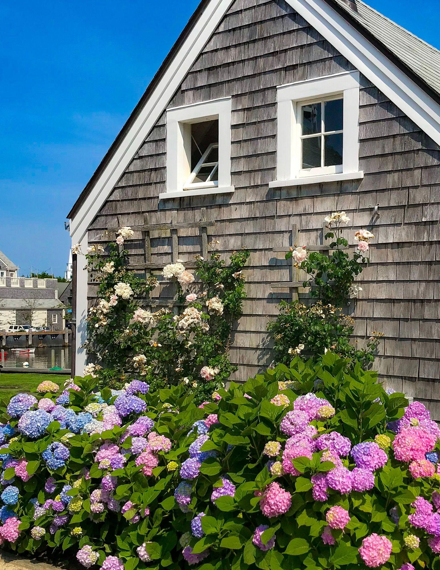 Nantucket Hydrangeas-28