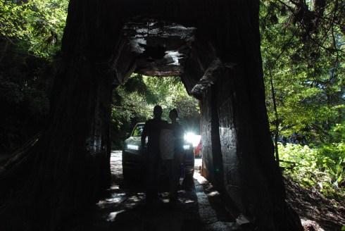tour-through-tree-5