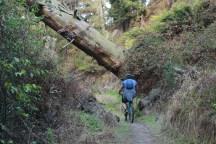 trails of joy