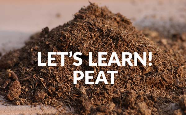 What's Peat In Beer?