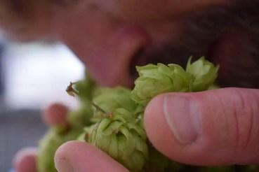 man smelling hops