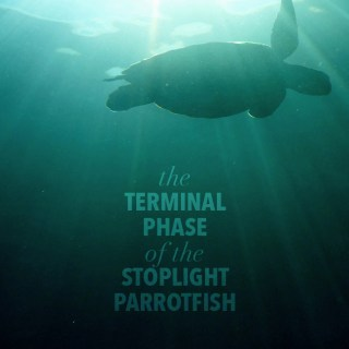 The Terminal Phase of the Stoplight Parrotfish