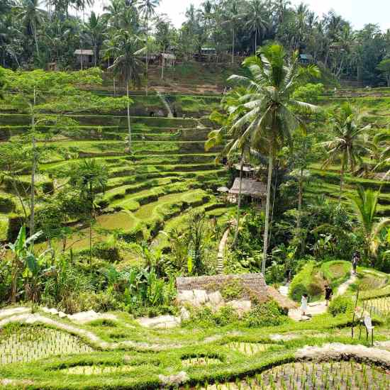 Tegalalang Rice Terraces Bali