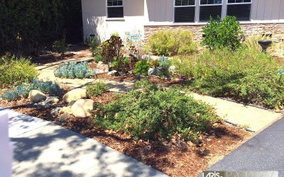 Claremont Drought Conditions Opens Doors to Unique Curb Appeal