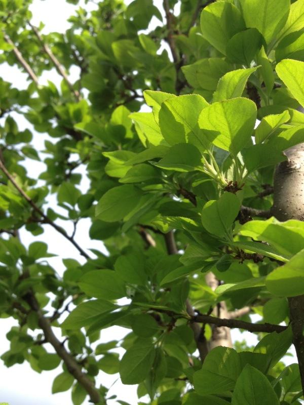 green things - shorts and longs - julie rybarczyk 05