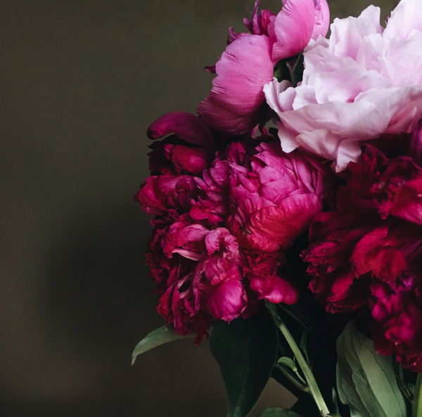 shorts and longs - peonies - julie rybarczyk