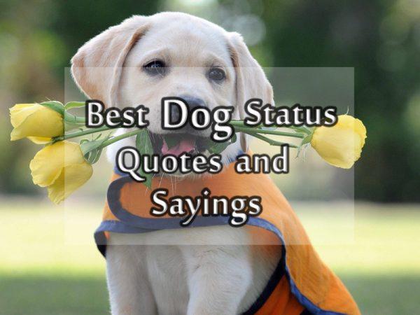 Quotes Loving Your Pet