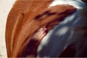 Equitación terapéutica