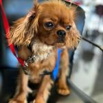 Terapias asistidas con perros (s'Hort Vell)