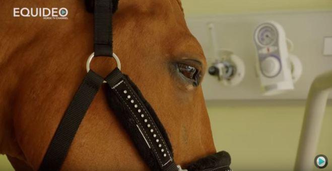 Peyo, cheval de coeur