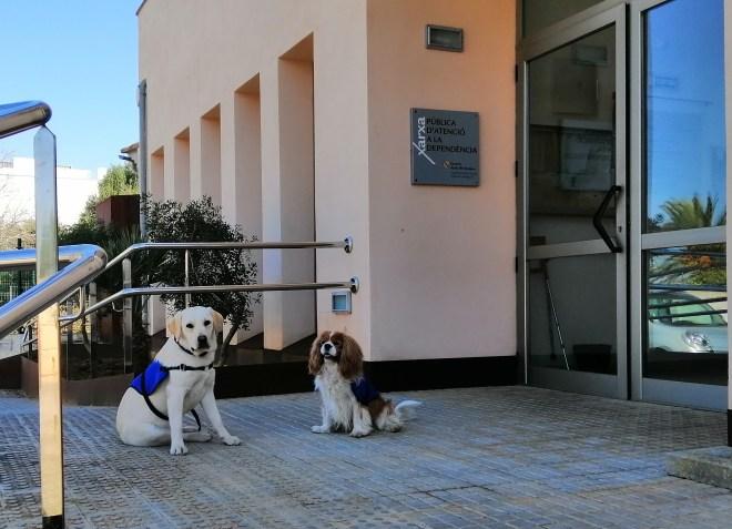 Intervenciones asistidas con perros en el ámbito de la atención a la dependencia