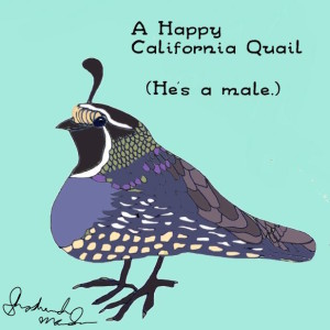 California Quail by Shoshanah Marohn 2016