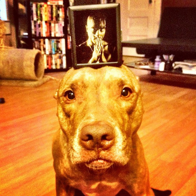 scout-is-the-single-most-composed-dog-on-the-planet-24