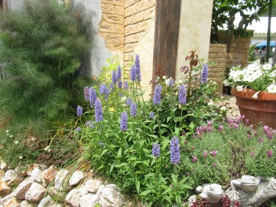 ネペタ ブルームーン の植栽風景です。滋賀のrosebrunchにて。