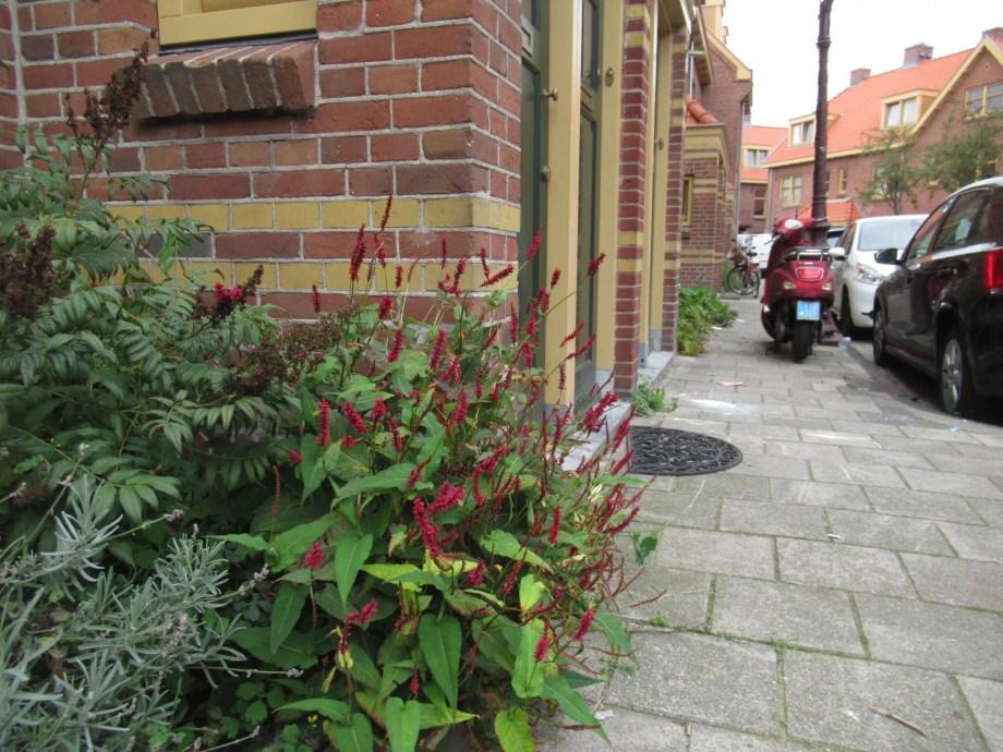 ペルシカリア ブラックフィールドの植栽例です。