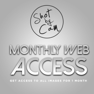 Monthly Website Access