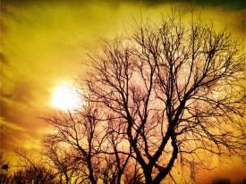Sun as a flower not a sunflower #iphoneography #photography #jerseycity