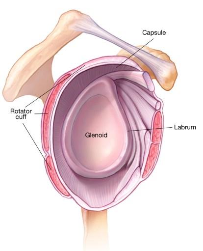 Glenoid labrum capsule and cuff.jpg
