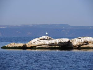 Lake bafa black-winged stilt