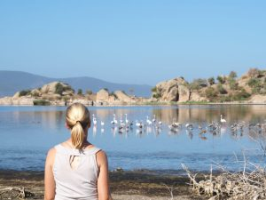 Flamingo's at lake bafa