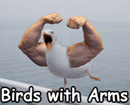 birds with arms link picture