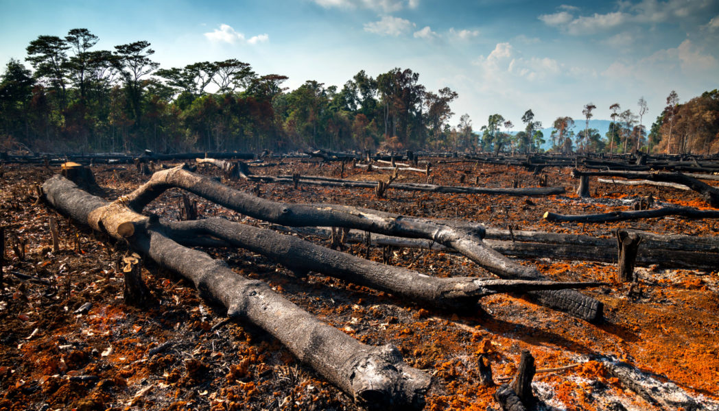 The clearing of trees in tropical rainforest areas has huge environmental impacts. Can Global Deforestation Really Cause An Impact In Our Environment Fatangs United