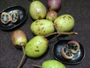 奄美大島南部のジャングルで採って来たフルーツ