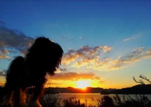 瀬戸崎灯台の夕日と昭和荘の愛犬